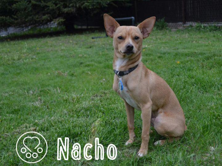 Nacho 2
