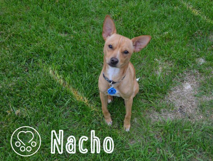 Nacho 1