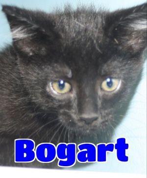 #4630 Bogart