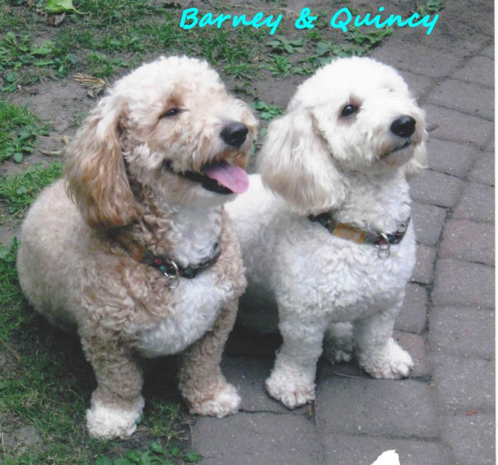 Barney and Quincy 1