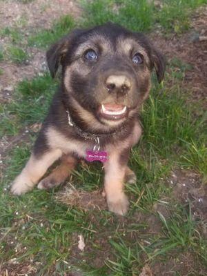 Dog for adoption - Nova-PENDING, a Mixed Breed in Saskatoon