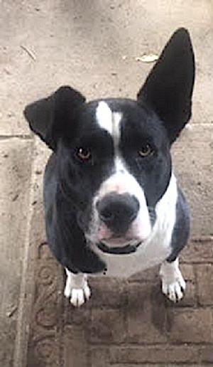Dog for adoption - Titus, a Border Collie Mix in Tacoma, WA