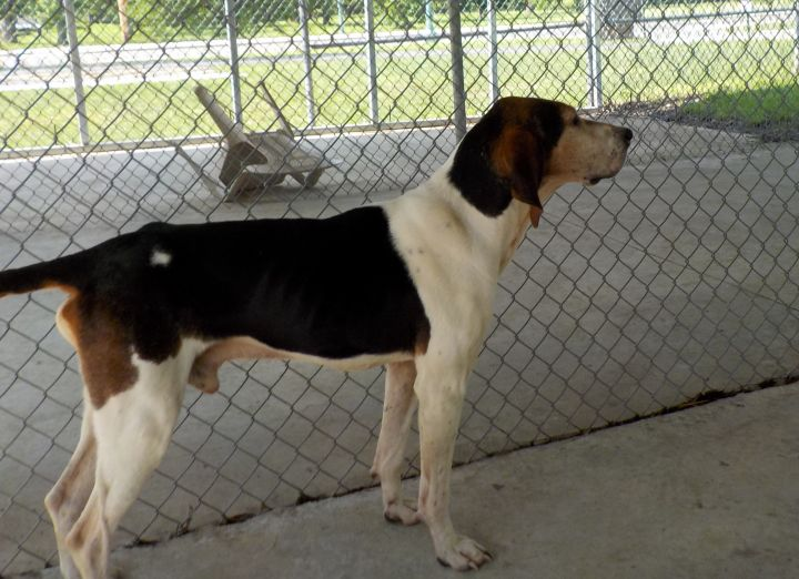 Buddy A-10/Adopted!!! 3
