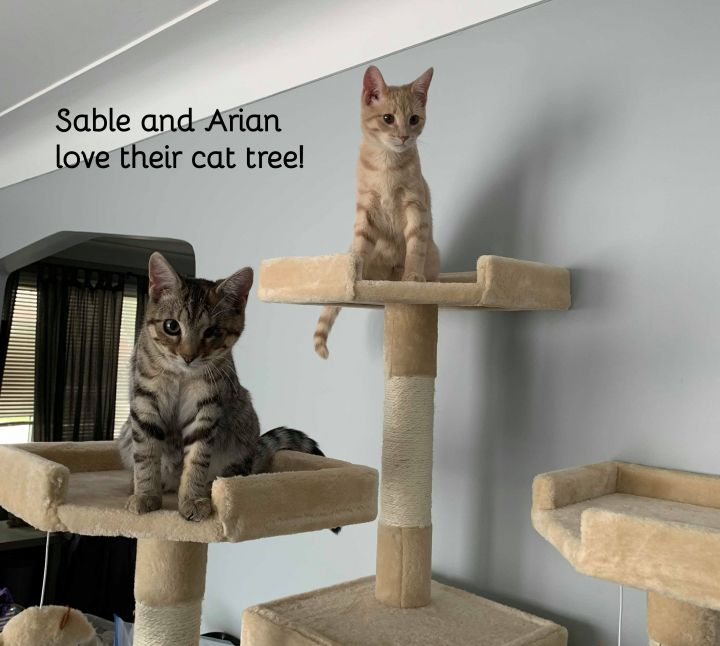 Sable and Arian (bonded sisters) 5