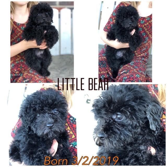 Prince Little Bear 2