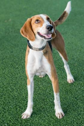 Moss, an adoptable Hound Mix in Loxahatchee, FL
