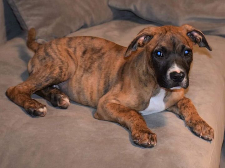 Denver, an adoptable Mixed Breed in Northwood, NH