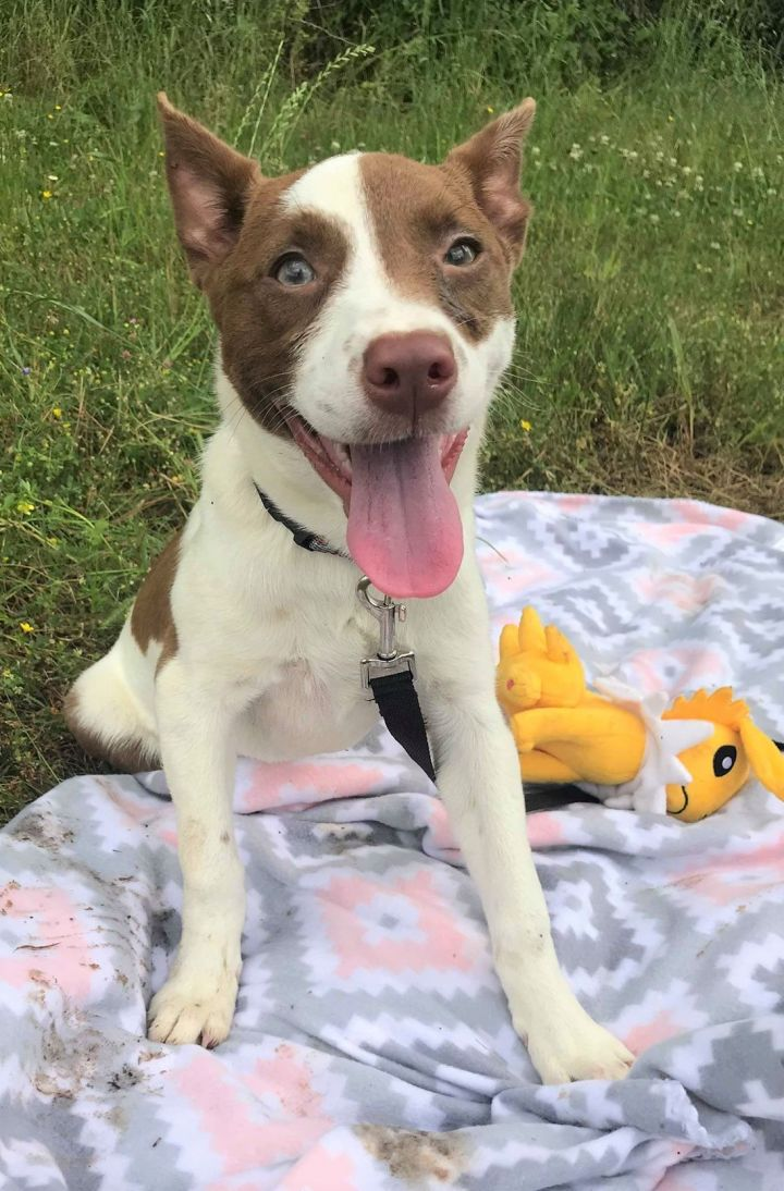Mercy, an adopted Mixed Breed in Northwood, NH