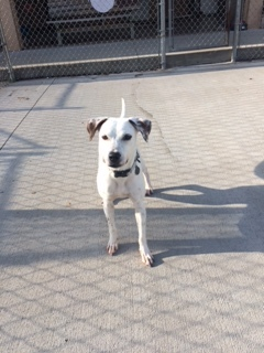 Sunny, an adoptable Hound Mix in Naperville, IL