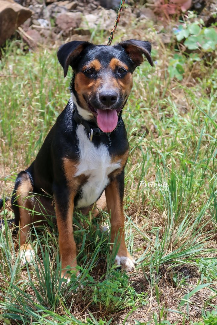 Clover, an adoptable Mixed Breed in Marble Falls, TX