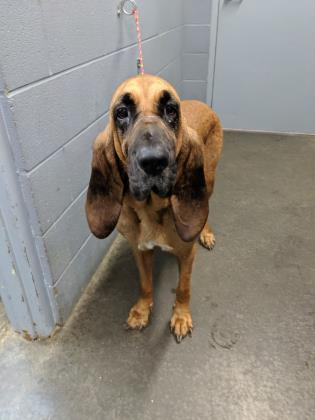 Rufus HW(-)RESCUE ONLY 2