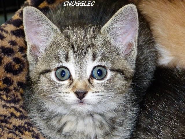 Snuggles 1