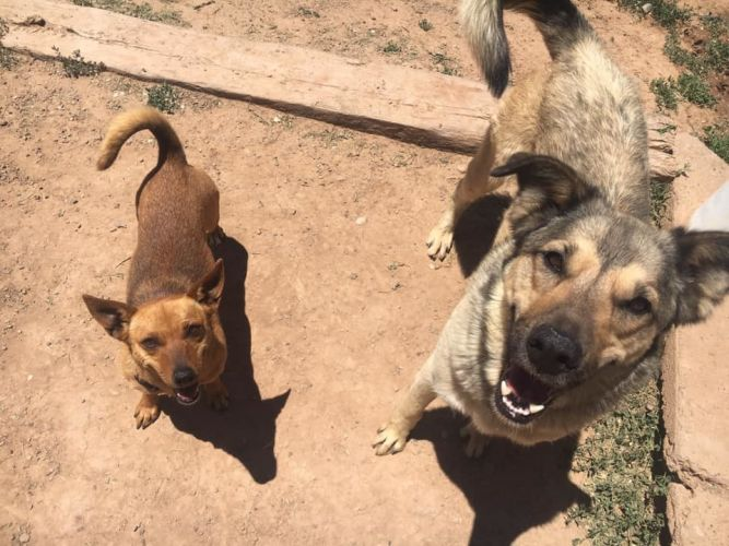 Pookie and Duke