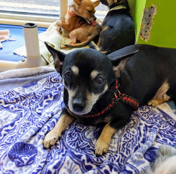Coco, an adopted Mixed Breed in Fredericksburg, VA