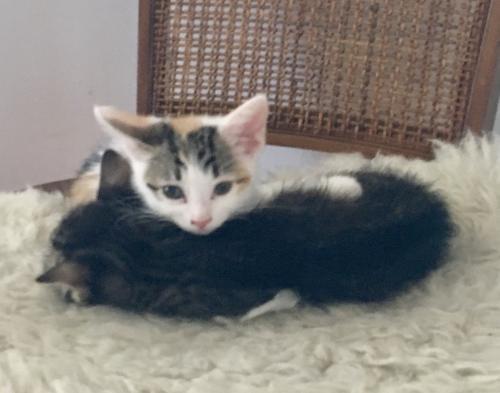 Sweet sisters Nina and Scarlett 3