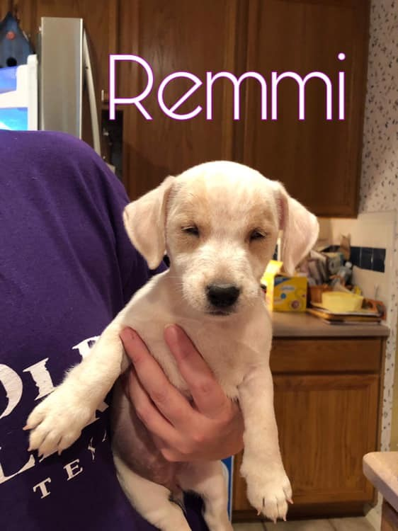 Remmi, an adoptable Terrier Mix in Troy, VA