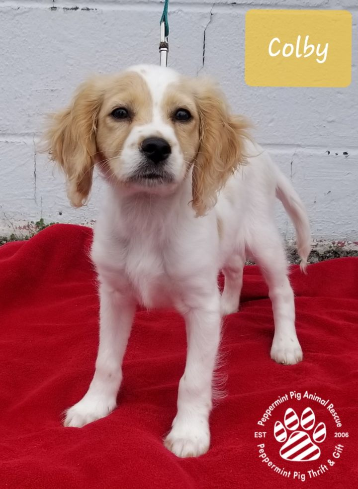 Colby ADOPTION PENDING 2