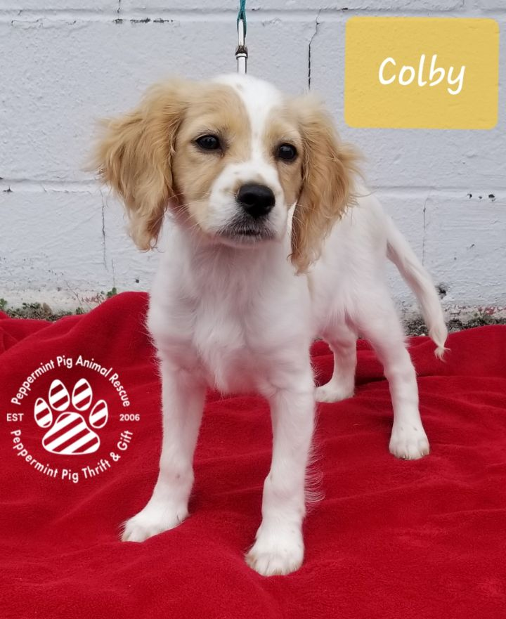 Colby ADOPTION PENDING 3