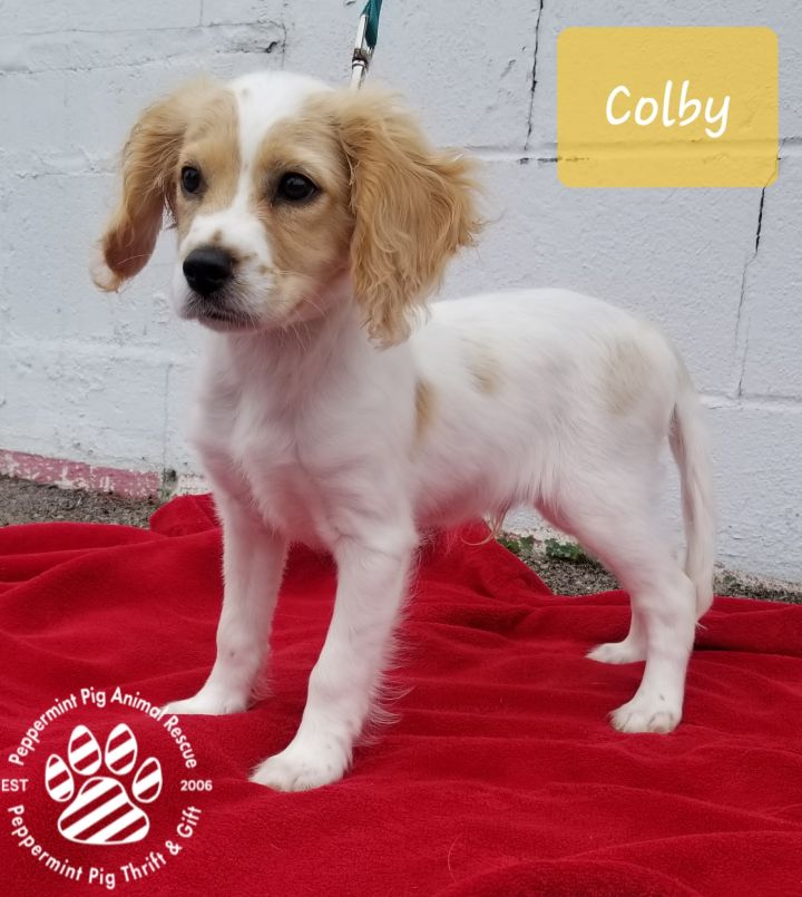 Colby ADOPTION PENDING 4
