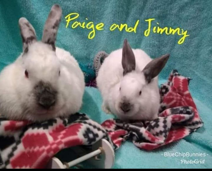Jimmy and Paige 3