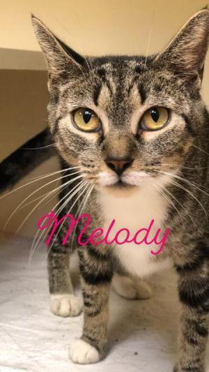 Melody - at Lebanon PetSmart!