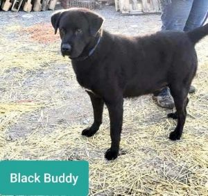 Black Buddy
