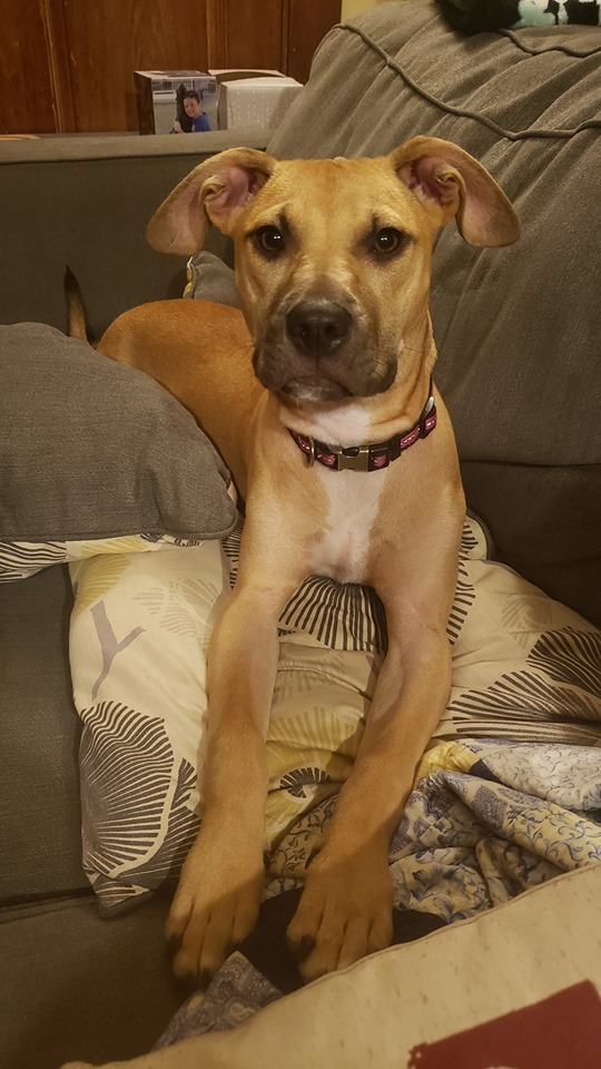 Melanie, an adopted Mixed Breed in Northwood, NH