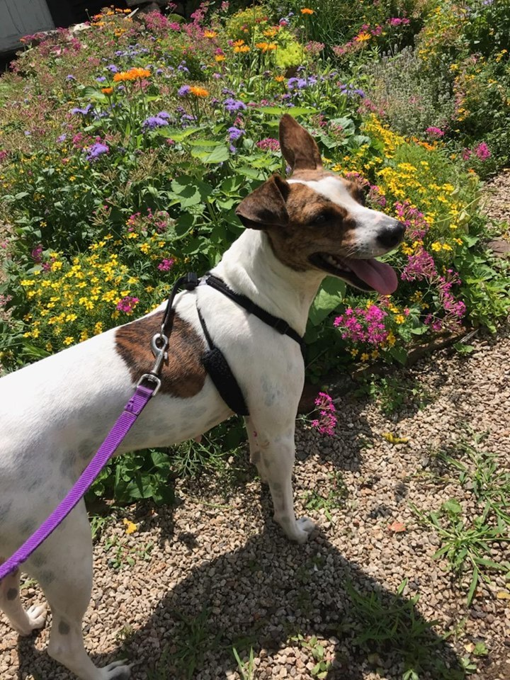 Ashley, an adoptable Mixed Breed in Northwood, NH