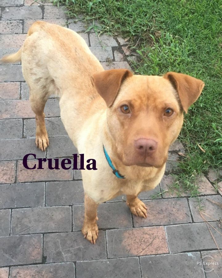 Cruella 1