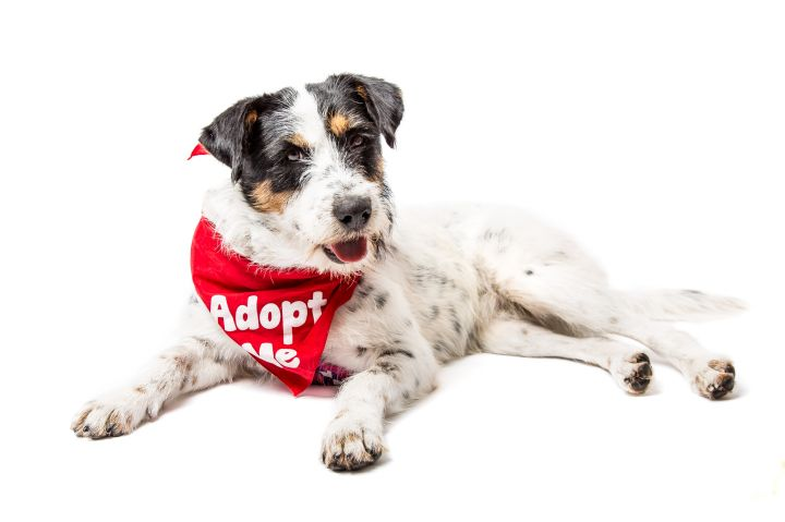 Golondrina, an adoptable Terrier Mix in Mississauga, ON