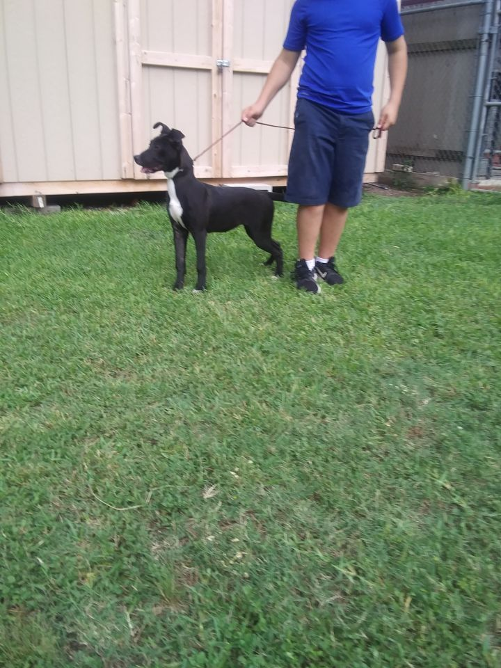 Pepper, an adopted Border Collie Mix in San Antonio, TX