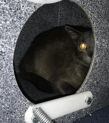 Dusky (Barn Cat) 1