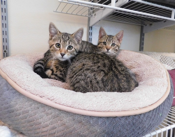 Sweet Kittens 4