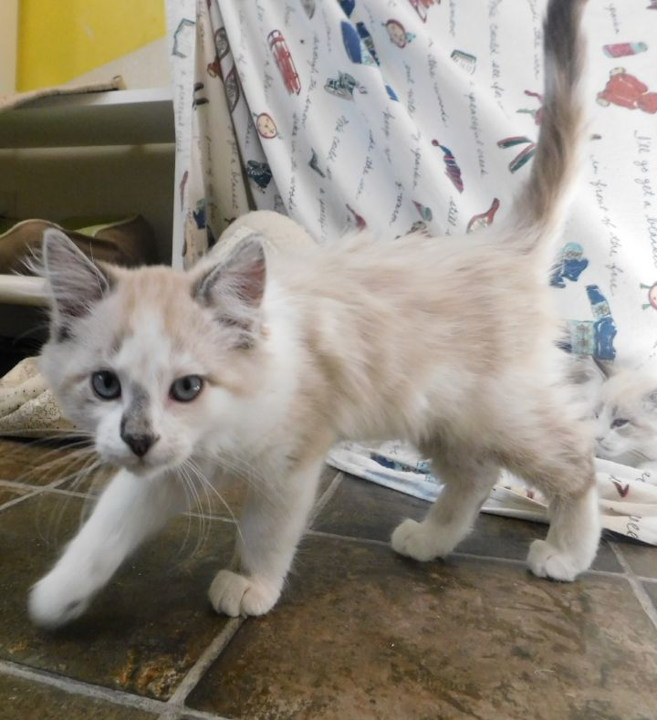 Sweet Kittens 5