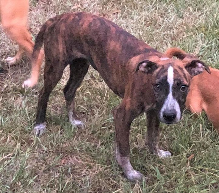 Carmen *HERE IN NH*, an adoptable Mixed Breed in Northwood, NH