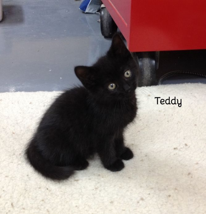 Oprah and Teddy (bonded sister and brother)