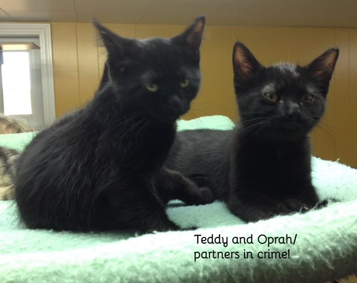 Oprah and Teddy (bonded sister and brother) 4