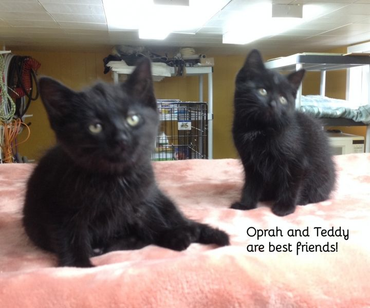 Oprah and Teddy (bonded sister and brother) 2