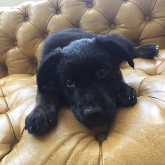Arielle, an adopted Retriever Mix in Brooklyn, NY