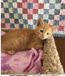 Cat for adoption - Milo - @Seneca Petco $25 Adoption Fee, a