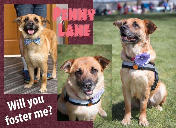 Penny Lane 6