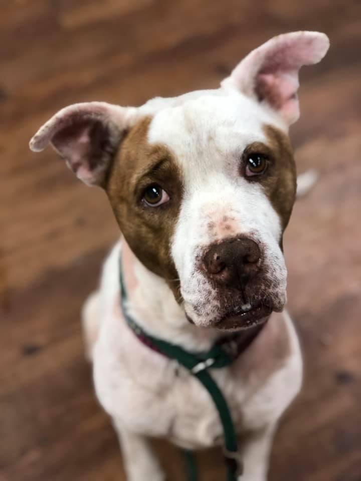 Elliot, an adoptable Terrier Mix in Lake Odessa, MI