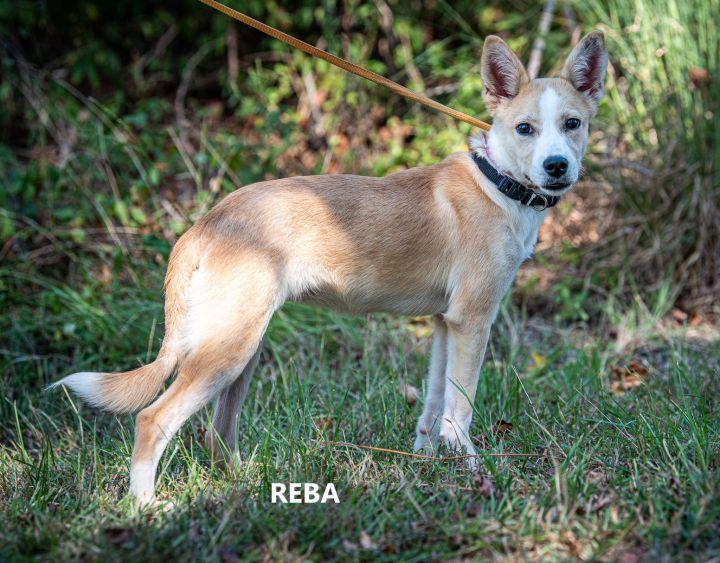 Reba 1