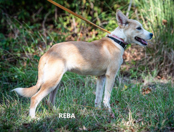 Reba 2