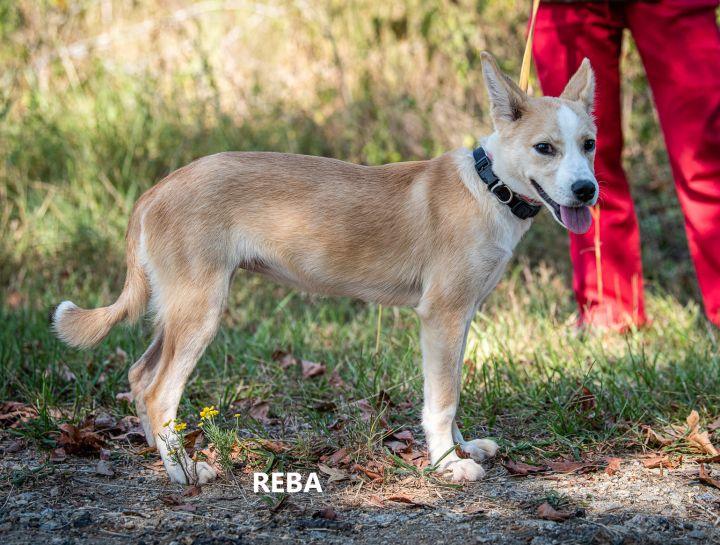 Reba 3
