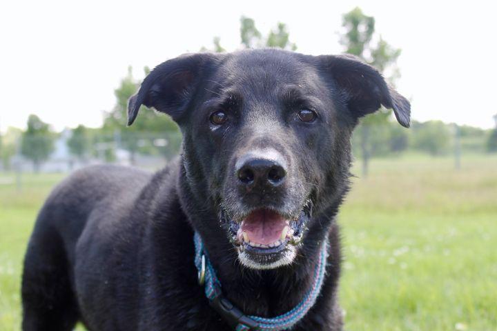 Jazzie, an adoptable Labrador Retriever Mix in Lake Odessa, MI