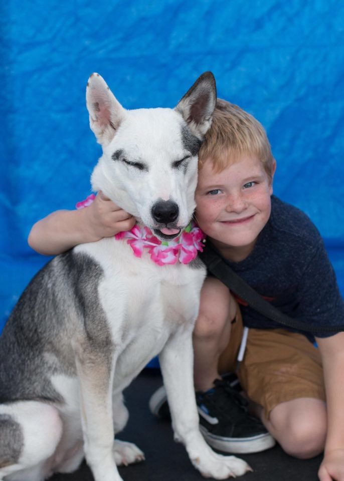 Dog for adoption - Aquila, a Husky & Australian Cattle Dog