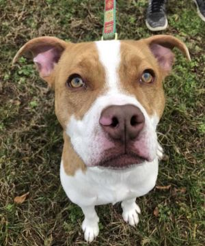 Birthdate322018 Breed One of a kind Weight 45 lbs Playtime anyone Chip is ready and willing t