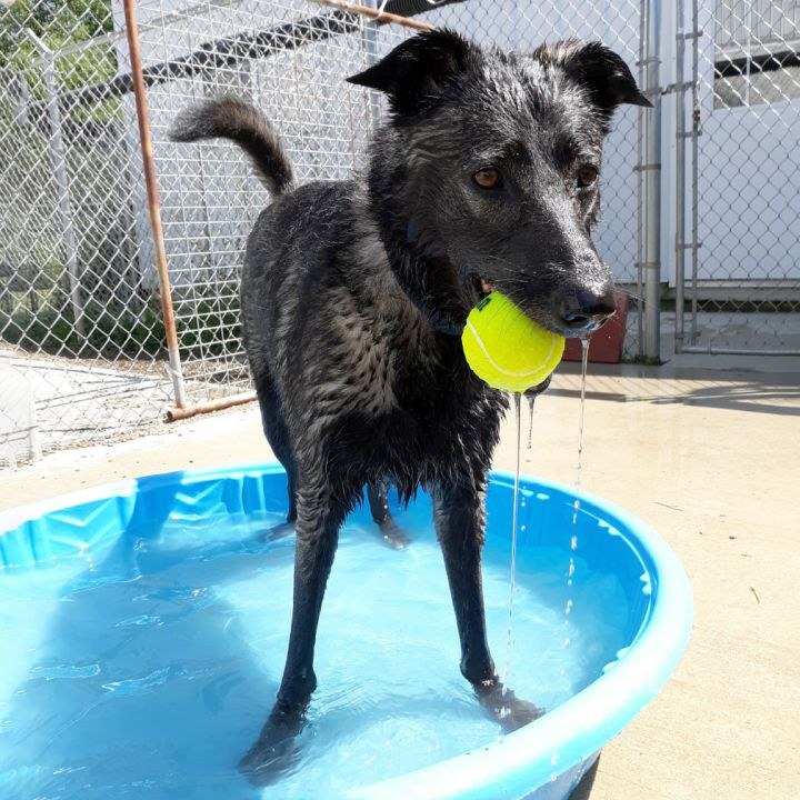 Phoebe, an adopted Mixed Breed in Westfield, NY