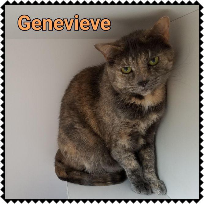 Genevieve